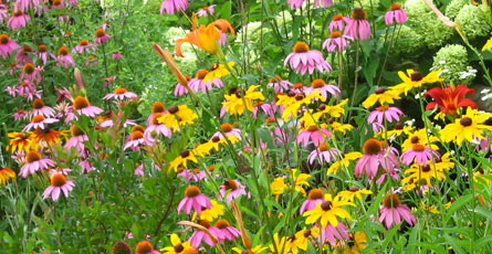 Flower_Planting